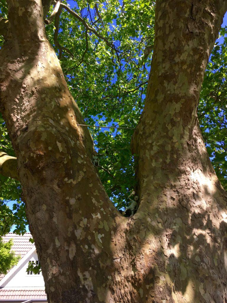 gl brydegaard træ